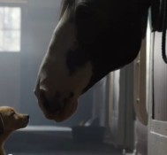 Budweiser – Puppy Love