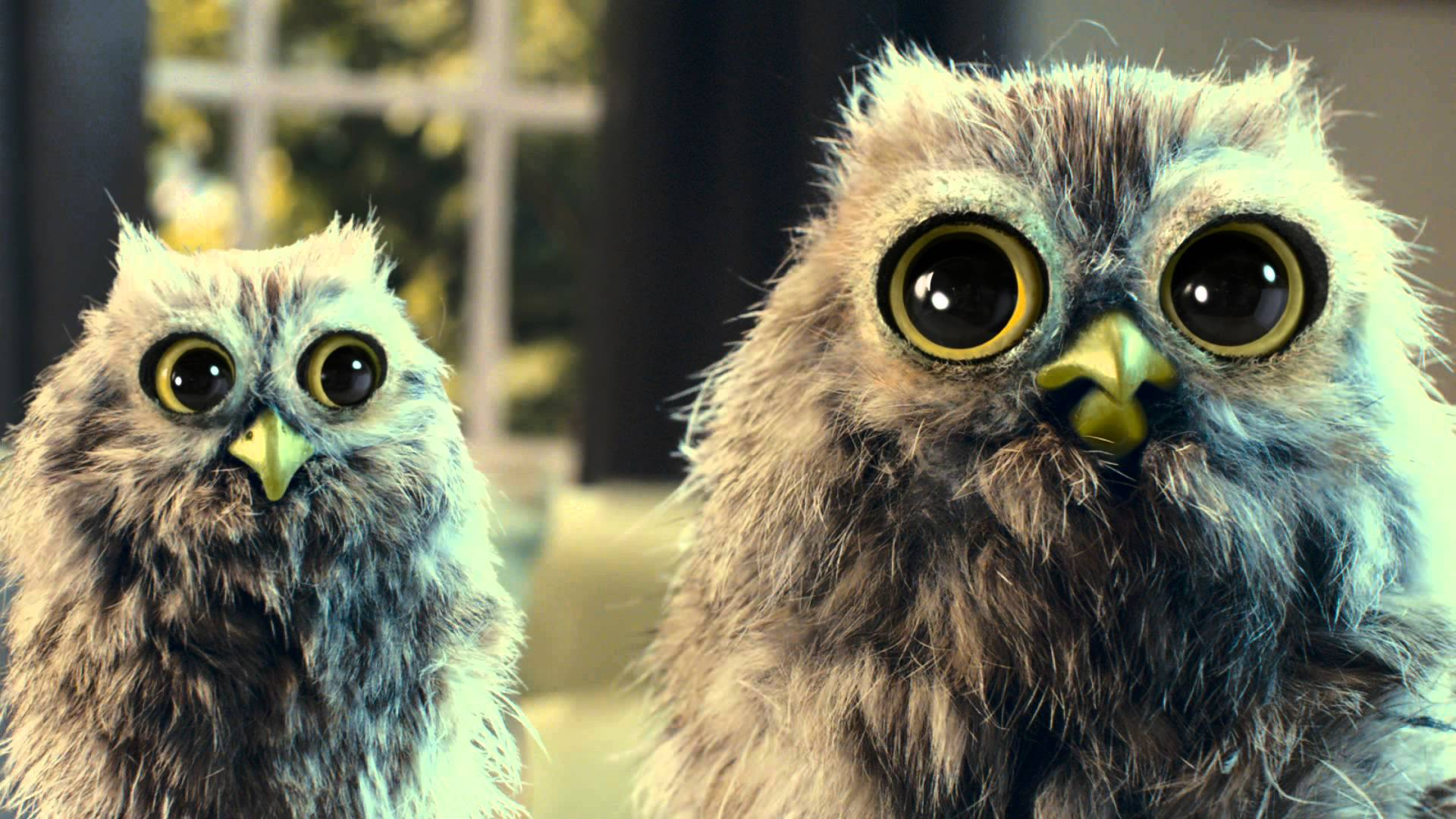 McVitie's Owl TV Advert