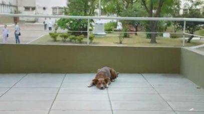 FATH: The faithful dog