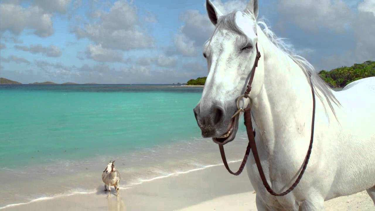 Directv hannah davis and her horse goat daily commercials aloadofball Images