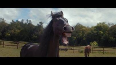 Volkswagen: Laughing horses