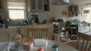 MoneySuperMarket: Get Money Calm – Wingsuit Cat
