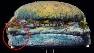 Burger King Moldy Whopper