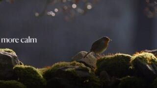 Everyone needs nature, so enjoy an uplifting moment of birdsong with the Nation