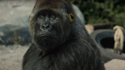 I want to break free–Gorilla
