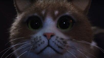 Scaredy Cat funny