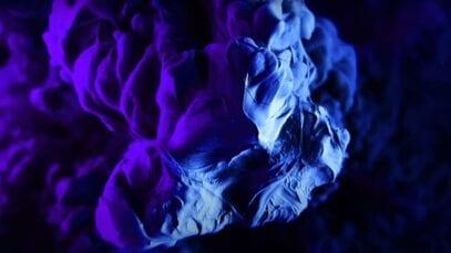 apple Experiments V_ Dark Universe