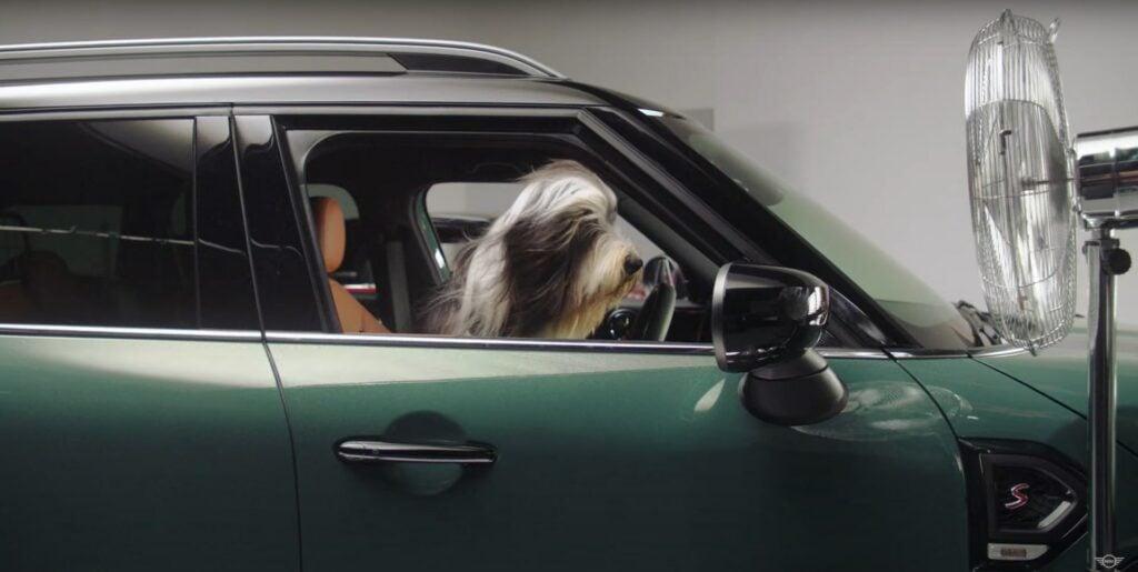 dogs cars auto advert